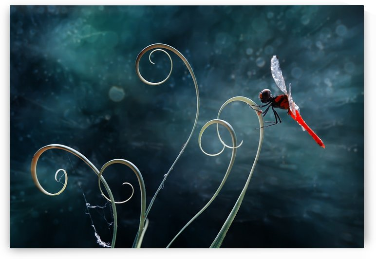 Red Dragonfly by 1x