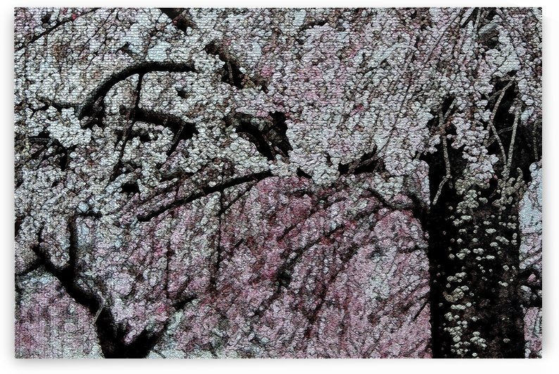 Cherry Trees Abstract Art Print by Katherine Lindsey Photography