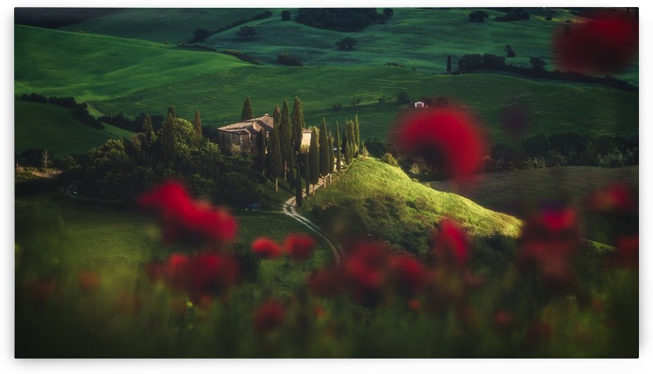 Tuscany - Spring Blossoms by 1x