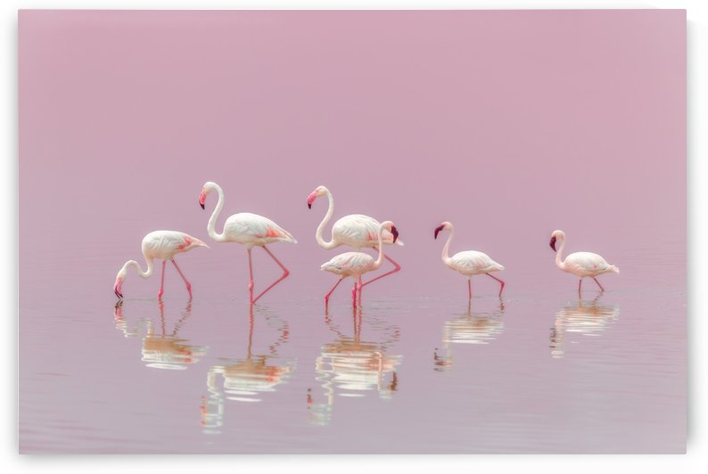 Flamingos by 1x