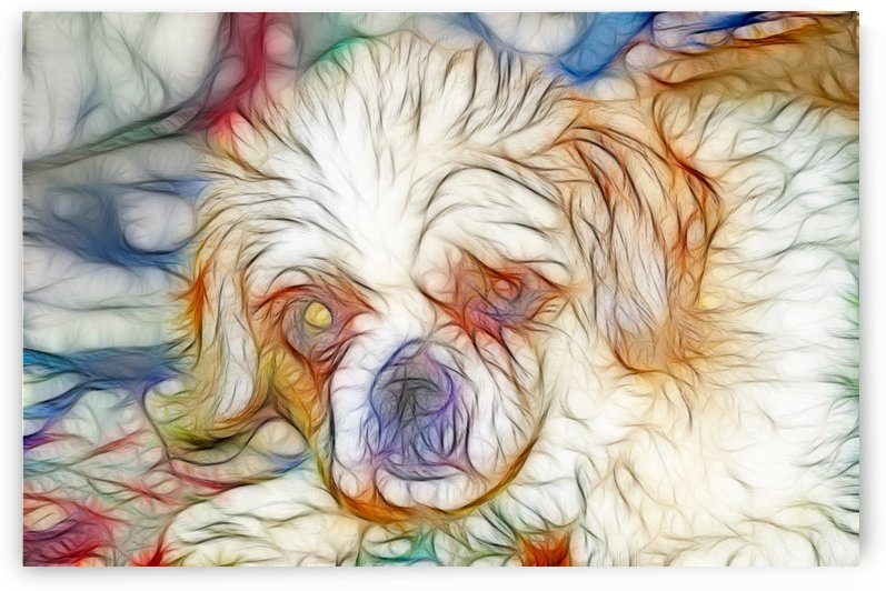SHIH TZU by Art Scott