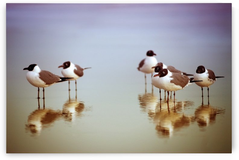 Birds on the Beach by Christopher Dormoy
