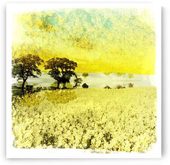 Mirrored field by Ulf Bley