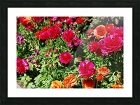 Flowers Growing in a garden Picture Frame print