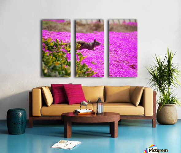 Pink Wild Flowers on a Hill With a Squirrel Split Canvas print
