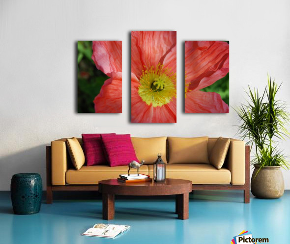 Poppies Growing in A Garden Canvas print
